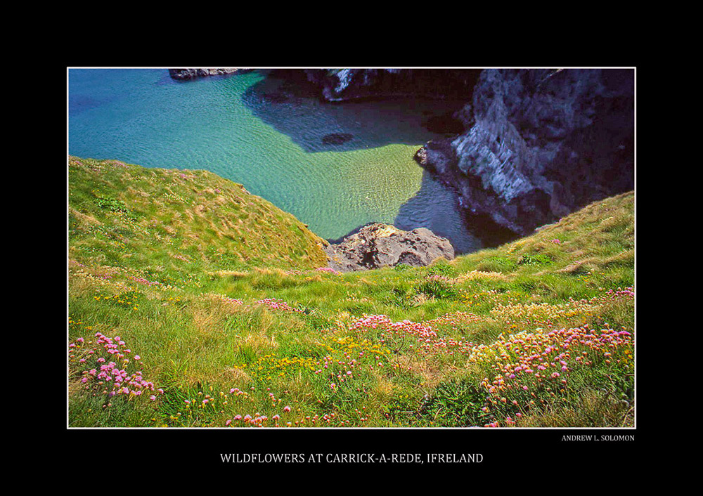 CARRICK-A-REDE-WILD FLOWERS
