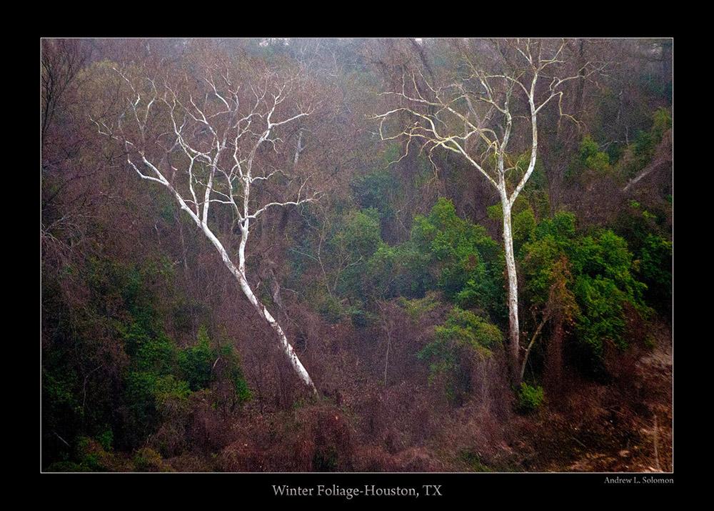 OMNI TREES IN FOG